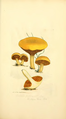 Coloured Figures of English Fungi or Mushrooms - t. 34.png