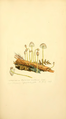 Coloured Figures of English Fungi or Mushrooms - t. 92.png