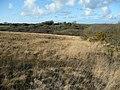 Common land near Demelza - geograph.org.uk - 715972.jpg