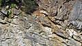 Copper Creek Thrust Fault (Thorn Hill section, northeastern Tennessee, USA) 5.jpg