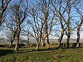 Copse near Housty - geograph.org.uk - 682995.jpg
