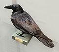 Corvus corax (taxidermied) at Göteborgs Naturhistoriska Museum 8528.jpg