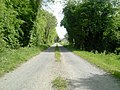 Country Road, Co Meath - geograph.org.uk - 1881417.jpg