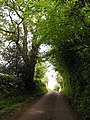 Country Road - geograph.org.uk - 442983.jpg