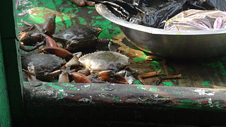 Crabs for cooking in Sundarbans.JPG