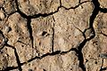 Cracks in the Ground (Lake County, Oregon scenic images) (lakDA0009).jpg