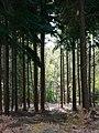 Creech Woods - geograph.org.uk - 1025159.jpg