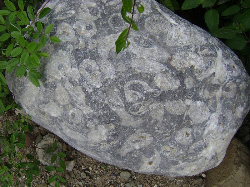 File:Crustáceos fósiles.JPG