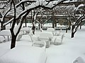 Crystal City Snow - Snow Dining on Snow (4198309789).jpg
