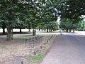 Cycle track and stands in Bushy Park - geograph.org.uk - 1983356.jpg