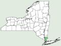 Cyperus acuminatus NY-dist-map.png