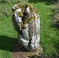Dacre Bear or Lion, detail of predator, spine, body and head, Cumbria, UK.jpg