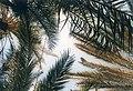 Dahab, Sinai, Egypt 1988 - panoramio (1).jpg