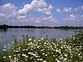 Daisies - panoramio - Tanya Dedyukhina.jpg
