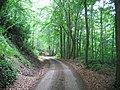 Dalkeith Park - geograph.org.uk - 28797.jpg
