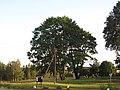 Daugailių sen., Lithuania - panoramio (44).jpg