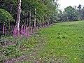 Deer Lawn in Bolderwood Grounds - geograph.org.uk - 57104.jpg