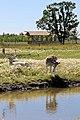 Deer Meadow Farms Corn Maze, Deacon Rd, Birds Hill (502011) (15738623874).jpg