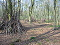 Dens or shelters in Micheldever Wood Hampshire - geograph.org.uk - 161135.jpg