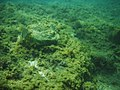 Depth of the Sea.jpg