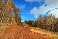 Detweiler Run Natural Area (Revisited) (3) (10544918563).jpg