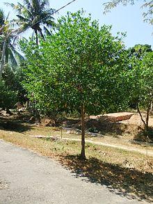 Karimunjawa National Park Wikipedia