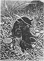 Die Gartenlaube (1880) b 233.jpg