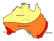 Australia Map Looks Like A Dog.Dingo Wikipedia