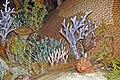 Diorama of a Devonian seafloor - gastropod, corals, algae (44743714675).jpg