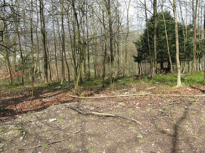 File:Displaced tree guards near the top of Graffham Down - geograph.org.uk - 1802803.jpg