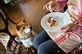 Dog (26345685425).jpg