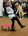 Dogdance - Flickr - Stiller Beobachter.jpg