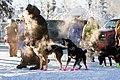 Dogsled, Alaska 2018 015-0 (26723633408).jpg