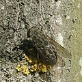 Drôle de mouche amazing fly (2584513360).jpg