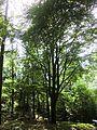 Dresdner Heide-Kannenhenkelweg 2016-022.7.jpg