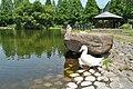 Duck0002.jpg