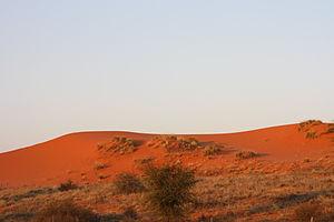 Kgalagadi Transfrontier Park - Image: Dunes rouges du Kgalagadi kalahari