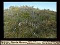ETH-BIB-Puerto Moreno, Hügel mit Waldbrand-Resten-Dia 247-11224.tif