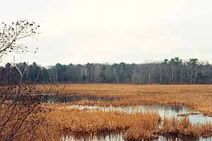 Freshwater marsh - Freshwater marsh in Kittery Point, Maine