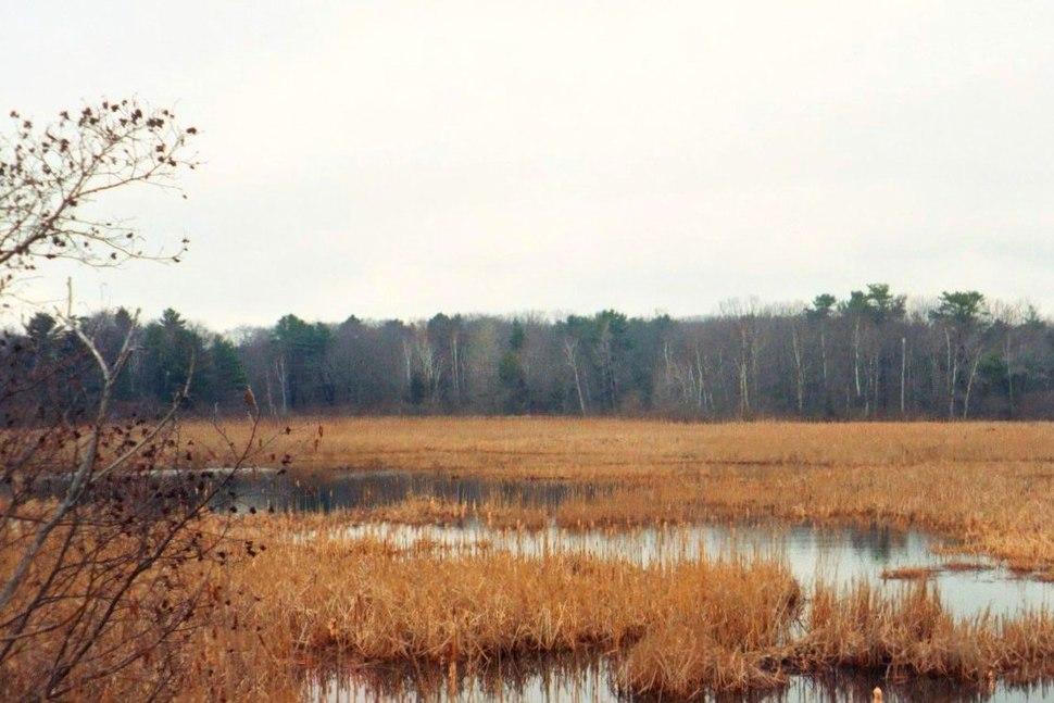 Early Spring Marsh