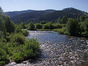 Cutthroat trout - Typical cutthroat trout habitat in the East Fork of the Bitterroot River, Sula, Montana