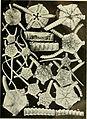 Echinodermata Ophiuroidea (1922) (21137752735).jpg