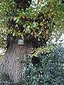 Eiche Naturdenkmal I.A.3 Schilder 2.jpg