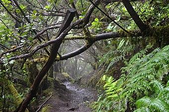 El Pijaral - Bosque encantado1.jpg
