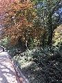 El otoño en el Retiro.jpg