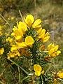 Elan Valley - Craig Goch (22084489596).jpg