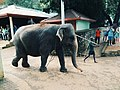 Elephant Accompanied For Bathing Session.jpg