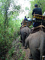 Elephant ride in Chiang Rai Province 2007-05 13.JPG