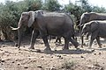 Elephants of Kenya 41.jpg