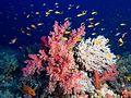 Elphinstone Reef soft corals.jpg